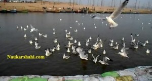 saiberian.birds.ganga