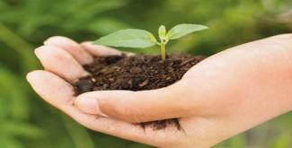 किसानों को दिया जा रहा आर्थिक बढ़ावा, लगाया 16,305,000 पॉपुलर पौधे